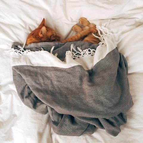 Besser ich denke Katze plötzlichen Gewichtsverlust