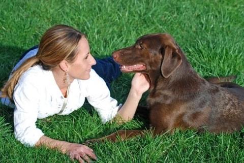 Beroepen voor dierenliefhebbers   Pawshake Blog