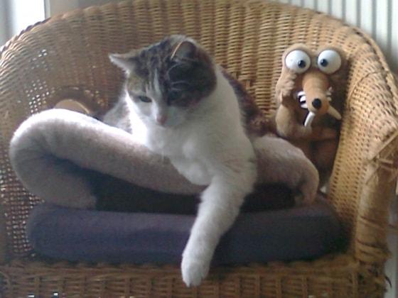Cats'n Kelly in Mechelen back image