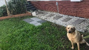 active pet care   dog sitting garde chat baulkham hills
