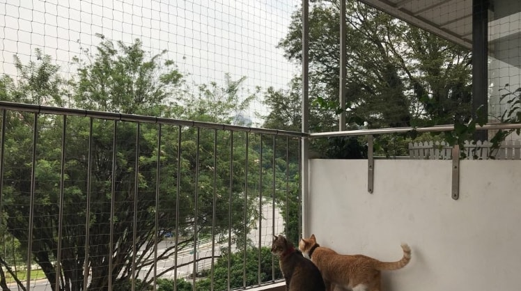 Fiza in Singapore back image