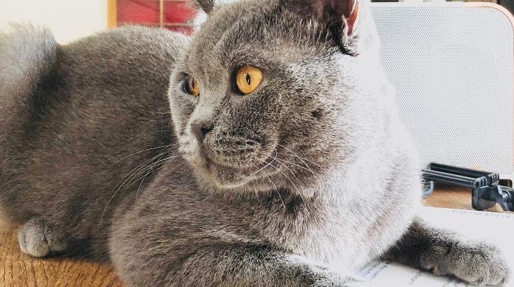 Lenette in Sidcup back image