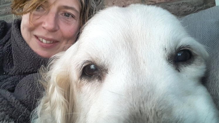 Beddy and Bo Housesitting in Coleford back image