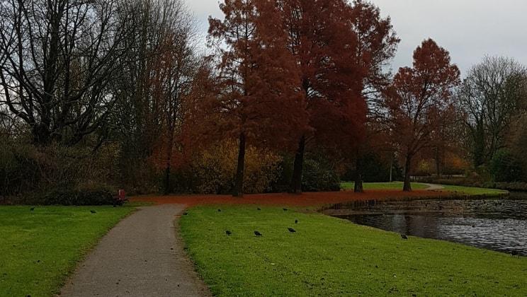 Thijs in Dordrecht back image