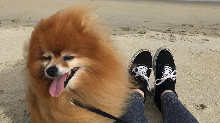 Lauren in Dunedin back image