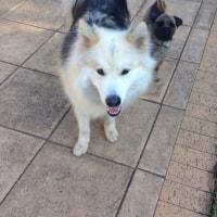 Baxter, Koda