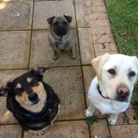 Baxter, Molly, Cyril O'connor