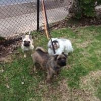 Baxter, Coco, Poppy