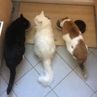 Sammy, Felix, Picasso