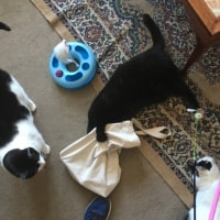 Ted, Nermal & Patsy