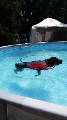 Rottweiler Bosie Dog Of Pet Parent Katherine Pawshake